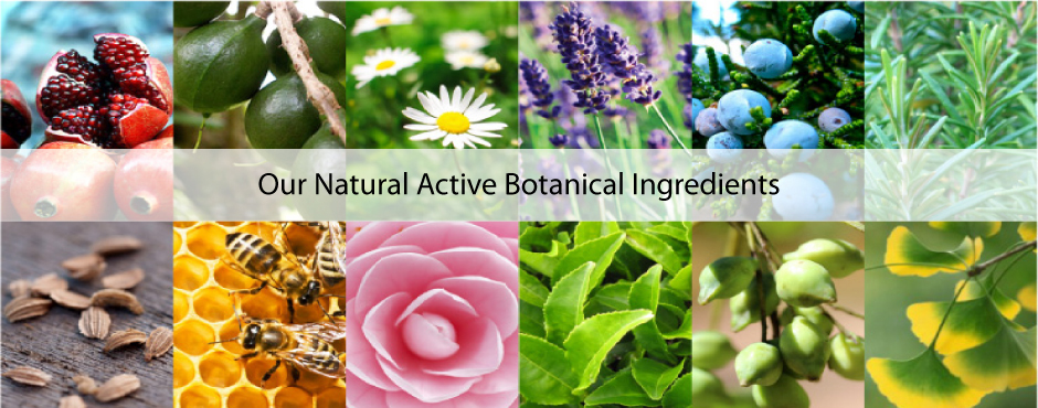 04 – Our Natural Active Botanical Ingredients